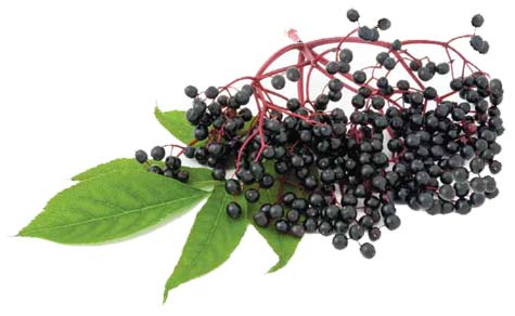 Elderberry Syrup, Herbal Remedies, Holistic Living with Kristy